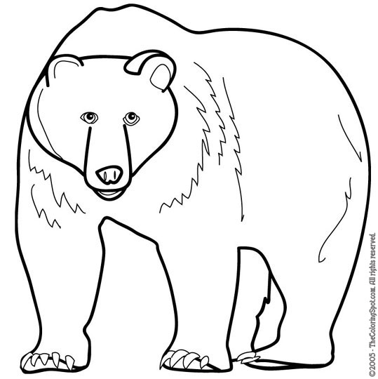 oso frontino Colouring Pages