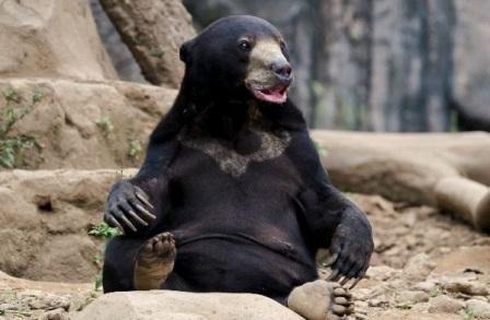 oso sentado