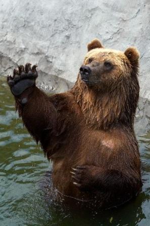 Investigaciones sobre los osos » OSOPEDIA