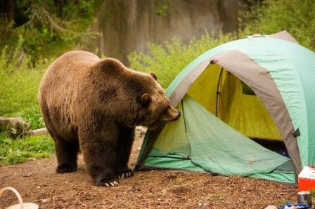 osos y humanos