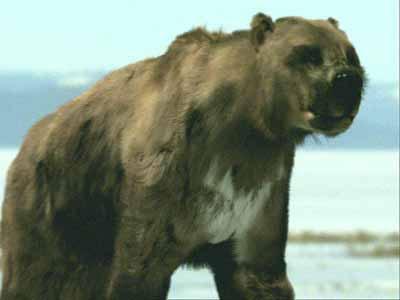 oso gigante cara corta